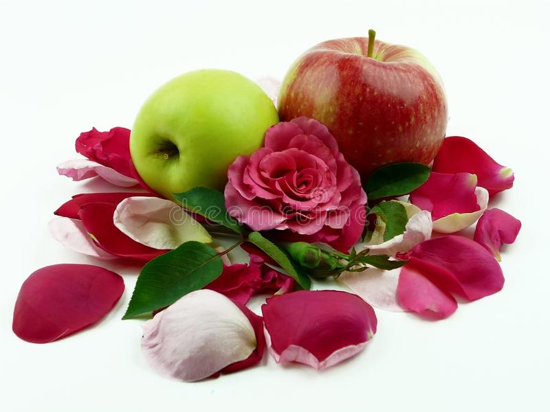 Maçãs nas folhas das rosas imagem de stock
