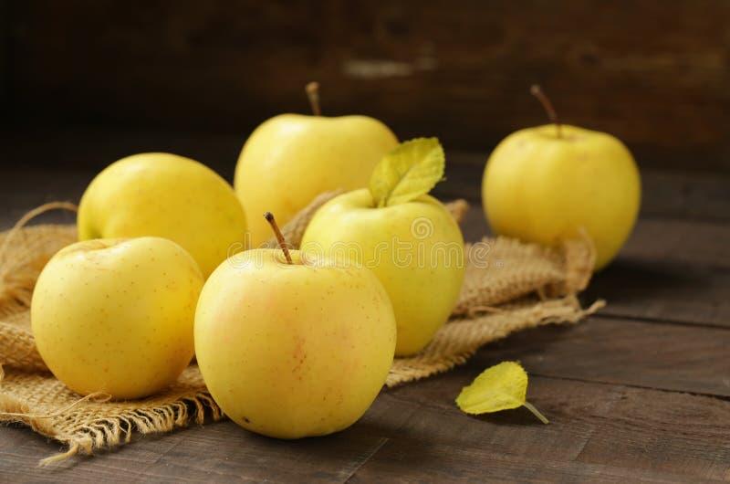 Maçãs orgânicas amarelas maduras fotografia de stock