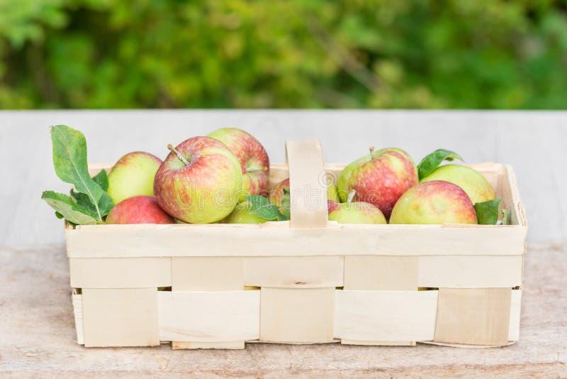 Maçãs orgânicas em uma cesta de madeira larga fotos de stock