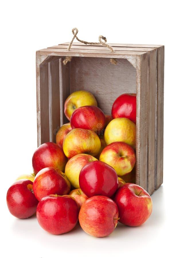 Maçãs orgânicas na caixa de madeira fotografia de stock