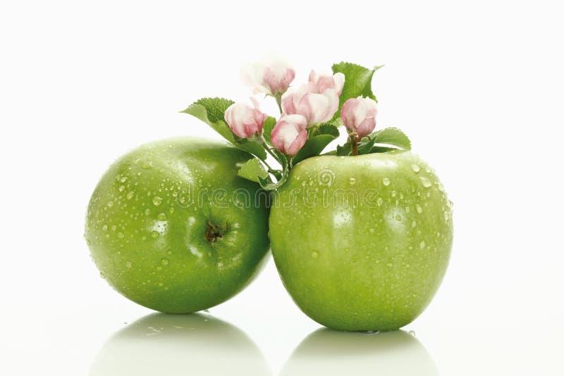 Maçãs verdes empilhadas, e flor da maçã imagens de stock