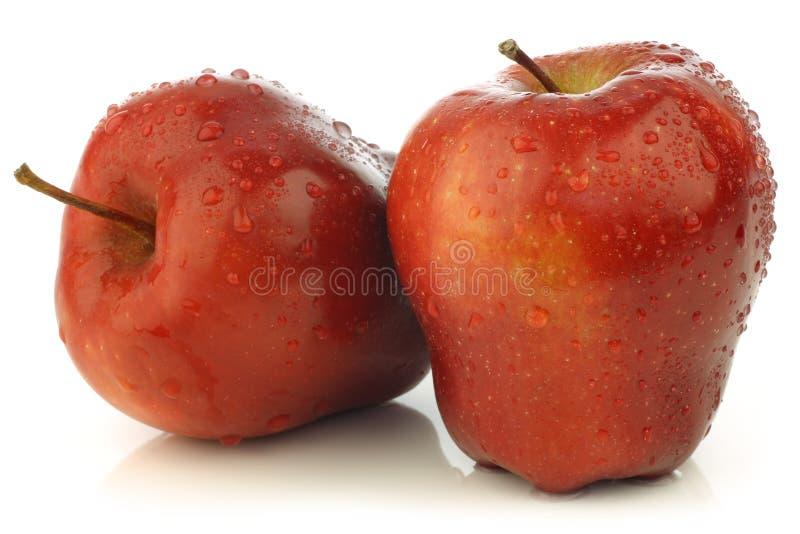 Maçãs vermelhas frescas e deliciosas do Ambrosia foto de stock
