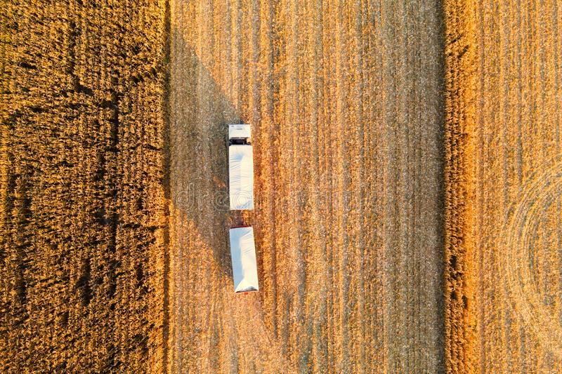 Maíz de Arvesting Camión con maíz en la cosecha del campo foto de archivo