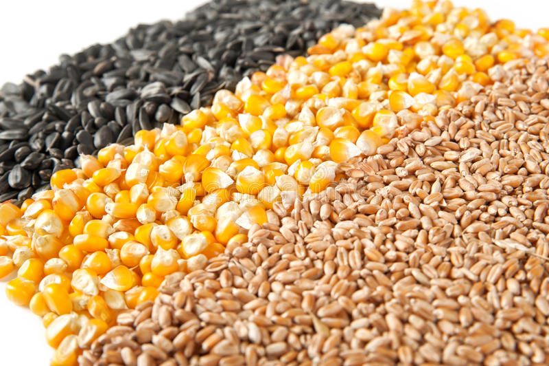 Maíz de la mezcla, trigo, semillas de girasol fotografía de archivo