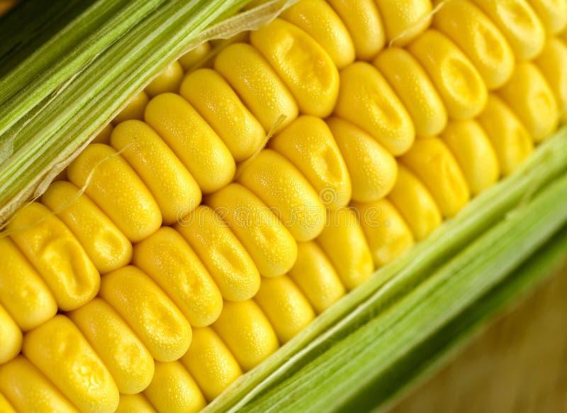 maíz dulce imágenes de archivo libres de regalías