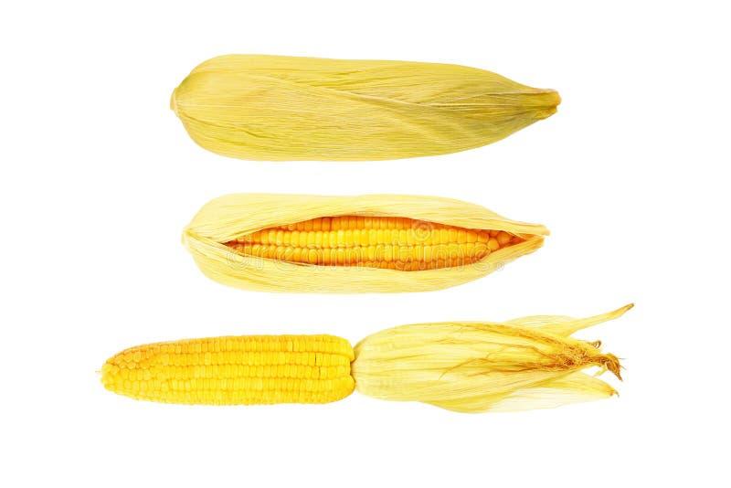 maíz dulce amarillo aislado en blanco imagen de archivo libre de regalías