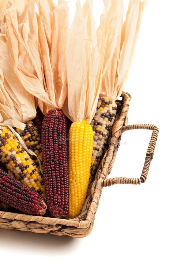 Maíz indio secado colorido en cesta imagenes de archivo