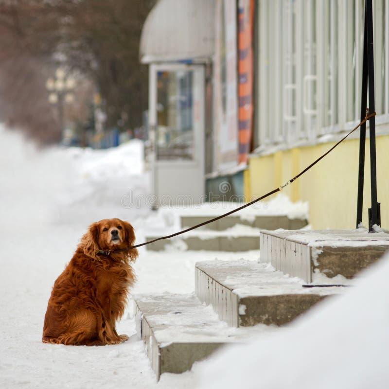 Maître de attente de chien images libres de droits