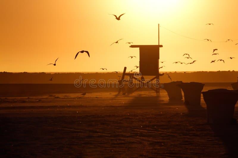 Maître nageur Tower et mouette dans le coucher du soleil photos libres de droits