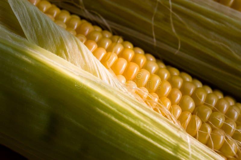 Download Maïs stock afbeelding. Afbeelding bestaande uit voedsel - 10783329