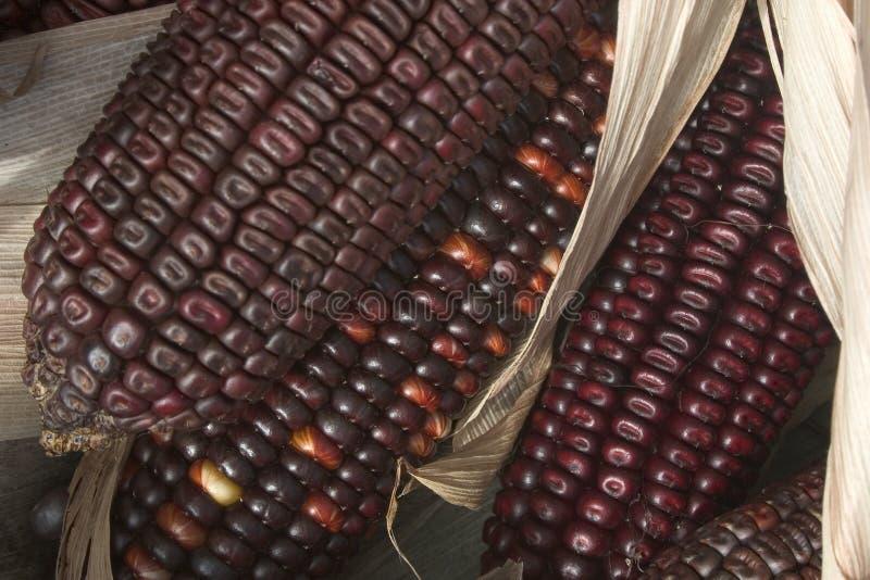 Maïs stock afbeeldingen