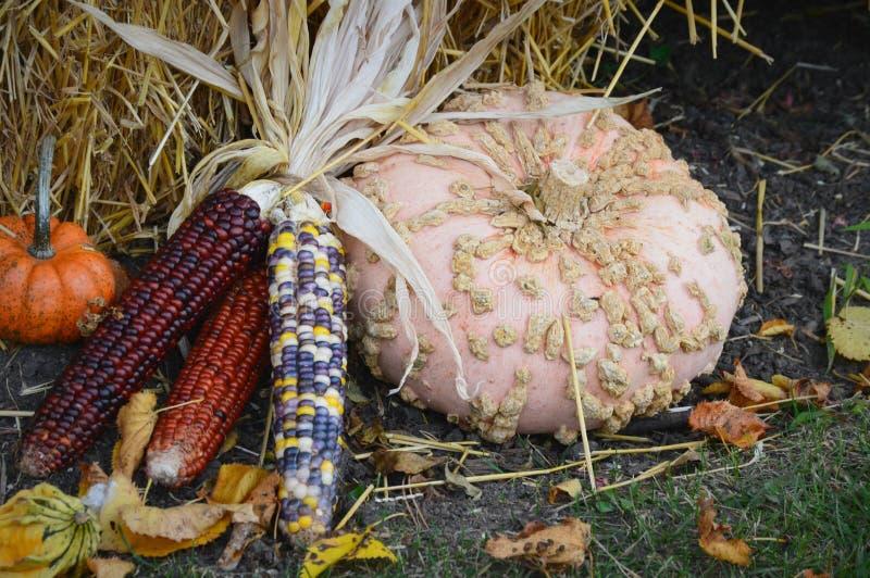 Maïs avec la courge image stock