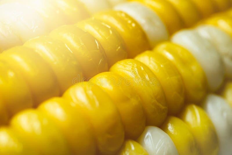 Maïs bouilli multicolore dans la fin à l'arrière-plan de nature photographie stock