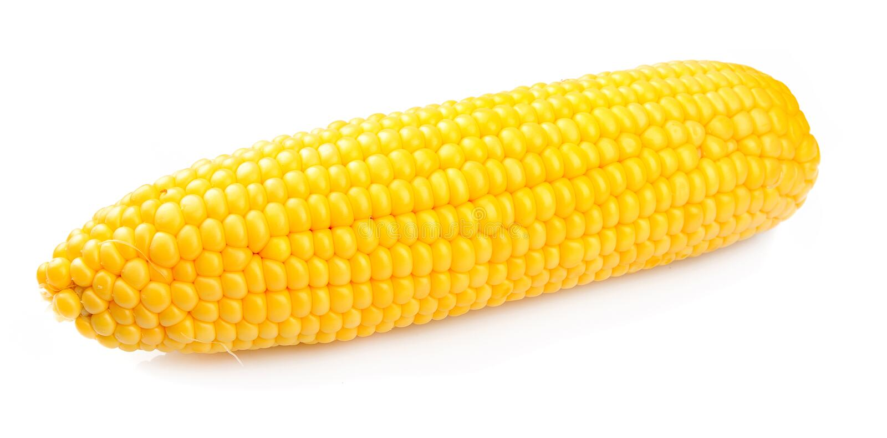 Maïs d'isolement photos stock
