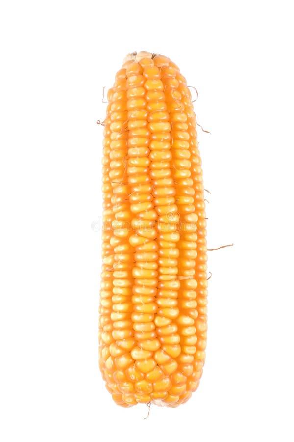 maïs d'isolement photo stock