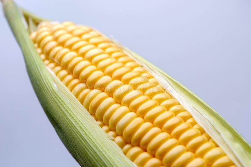 Maïs d'isolement sur le fond bleu photos libres de droits