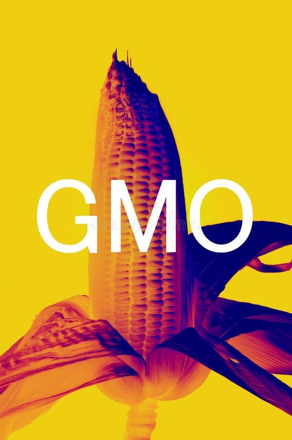 Maïs d'OGM photo stock