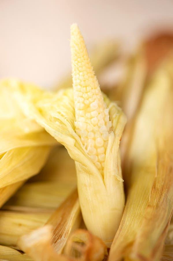 Maïs de bébé comme izakaya fait maison délicieux de rôti image stock