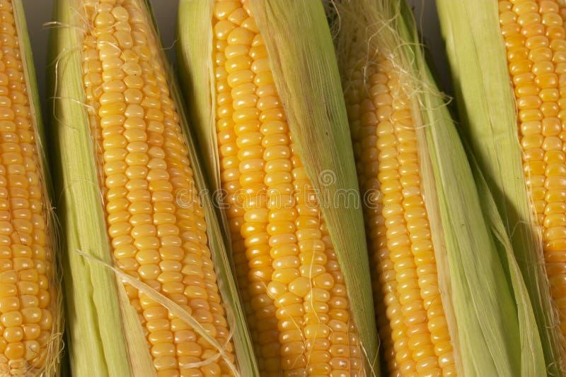Maïs de texture image libre de droits