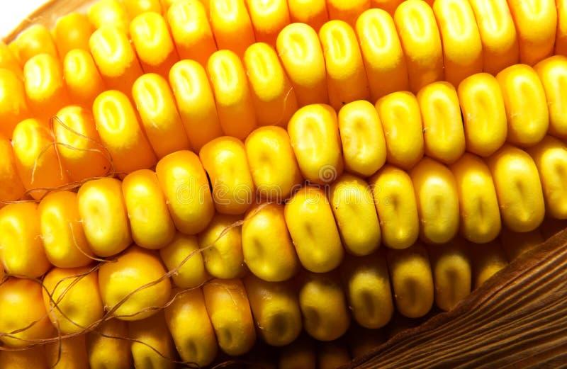 Maïs de zone images stock