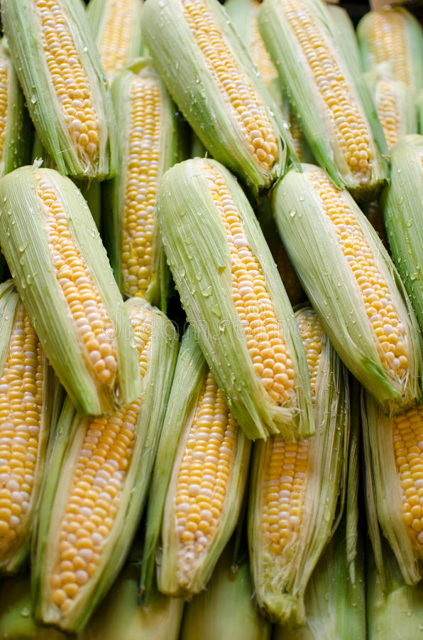 Maïs du cobb empilé dans les rangées photo stock