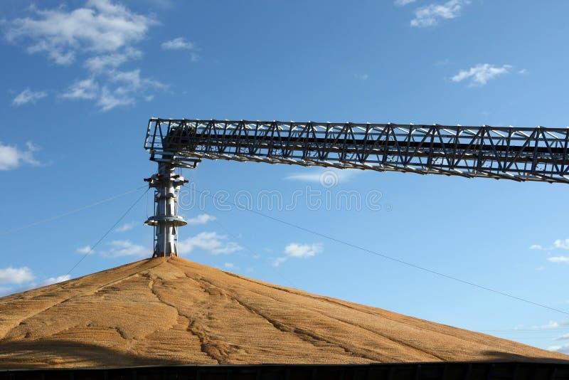 Maïs en surplus photos libres de droits