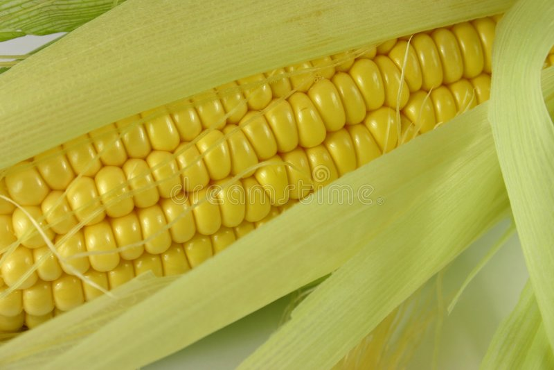 Maïs frais images libres de droits