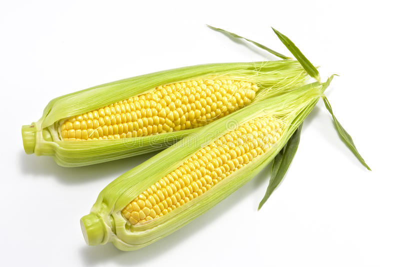 Maïs frais doux photo stock