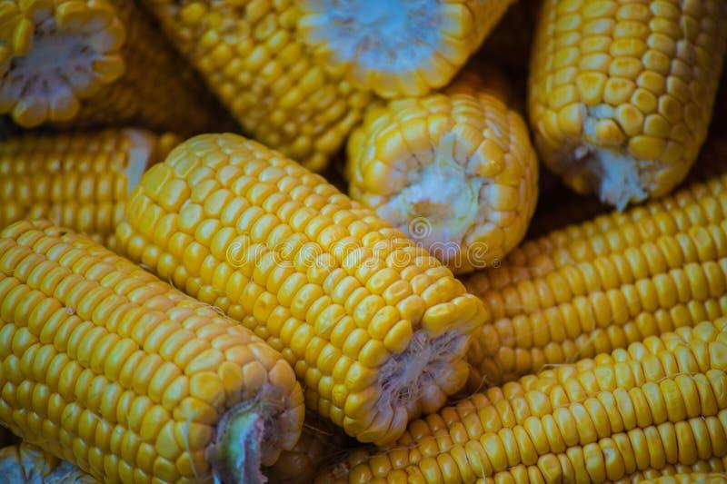 Maïs frais sur des épis photos stock