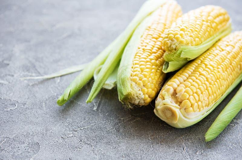 Maïs frais sur des épis photographie stock libre de droits