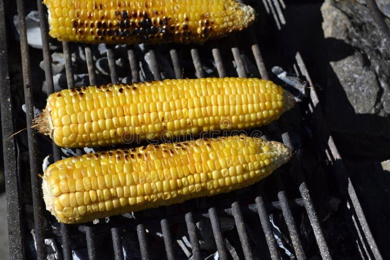 Maïs grillé photo stock