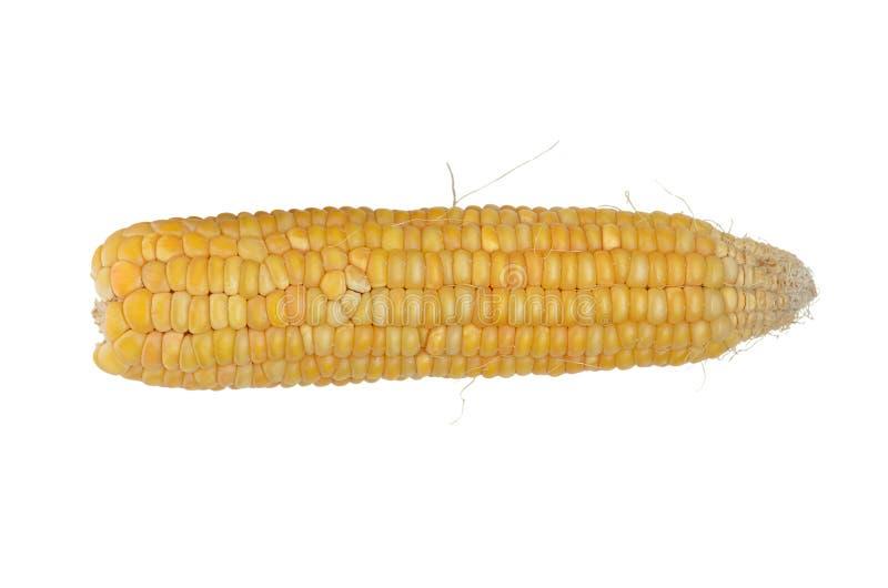 Maïs jaune simple d'isolement au blanc image libre de droits