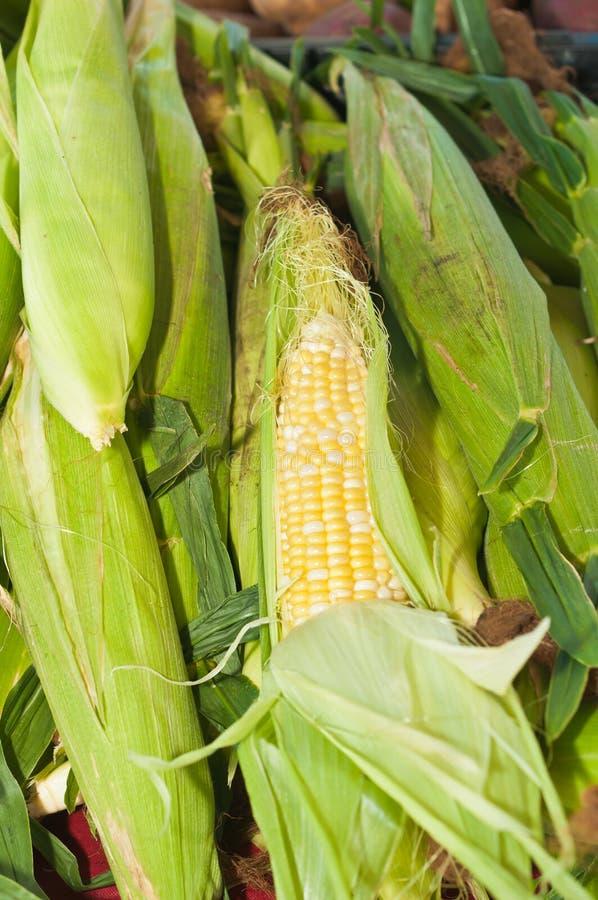 Maïs local fraîchement sélectionné à vendre à un marché tropical d'agriculteurs image libre de droits