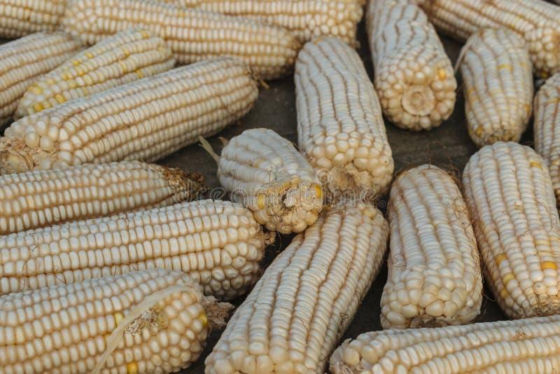 Maïs présenté au sol pour sécher en Chine images libres de droits