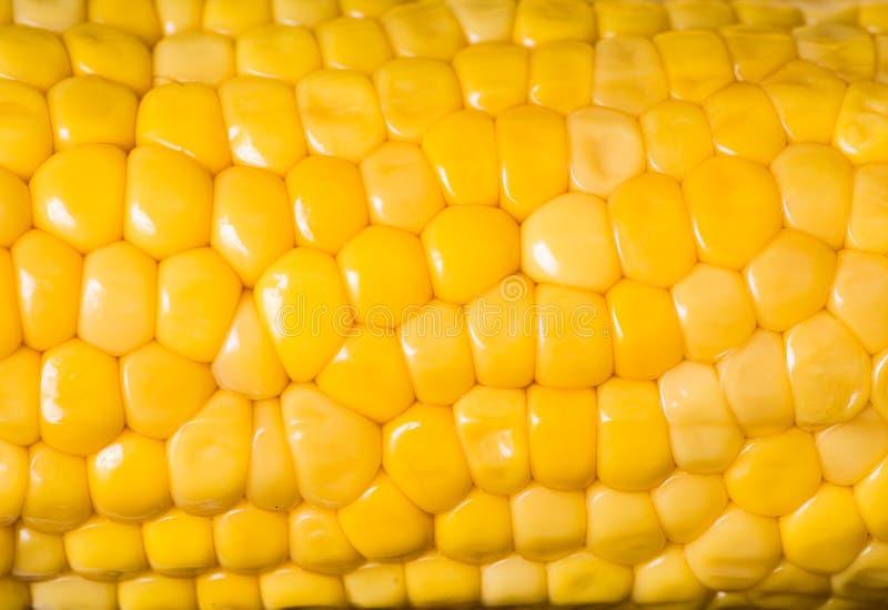 Maïs prêt pour examiner dans le laboratoire photo libre de droits