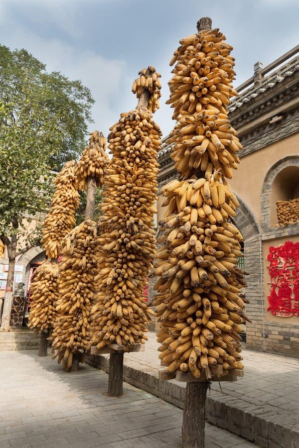 Maïs séché au soleil dans la cour photo libre de droits