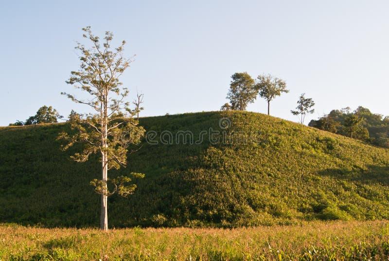 Maïs sur la colline images stock