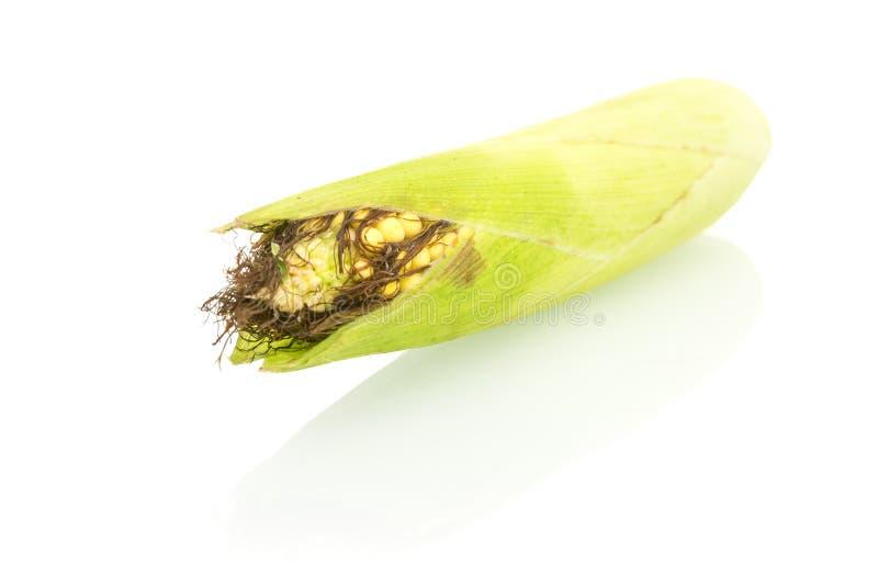 Maïs sur le fond blanc image libre de droits
