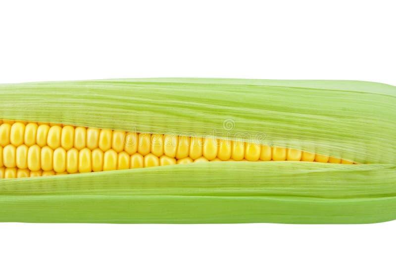 Maïskolf, rijpe zoete gele graankorrels onder groene bladeren stock afbeeldingen