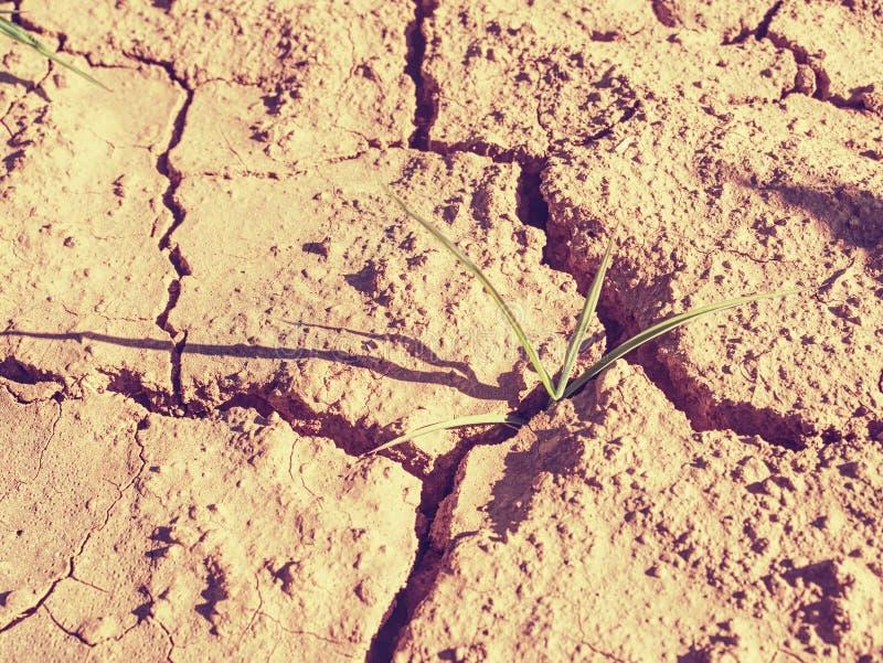 Maïssteel in droge rode ijzergrond zonder vochtigheid en voedingsmiddelen royalty-vrije stock afbeeldingen