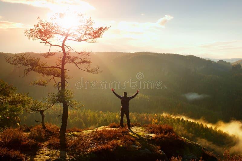 mañana asoleada Caminante feliz con las manos en el soporte del aire en árbol de pino del bramido de la roca Valle brumoso y de n fotos de archivo