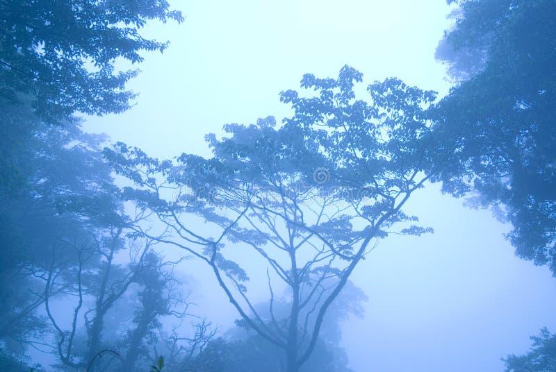 Mañana azul en el bosque con niebla fotografía de archivo