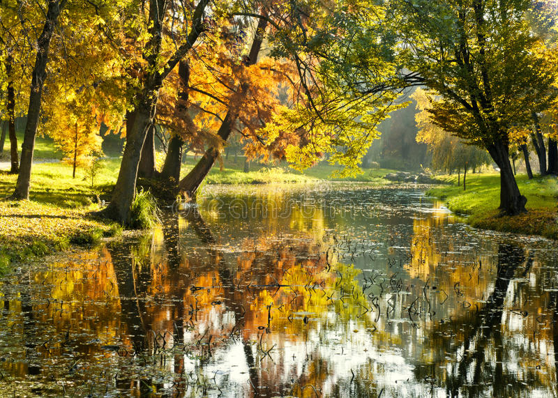 Mañana brillante sobre el río en el río del bosque y árboles en caída Mañana otoñal con colores calientes hermosos en parque imagen de archivo libre de regalías