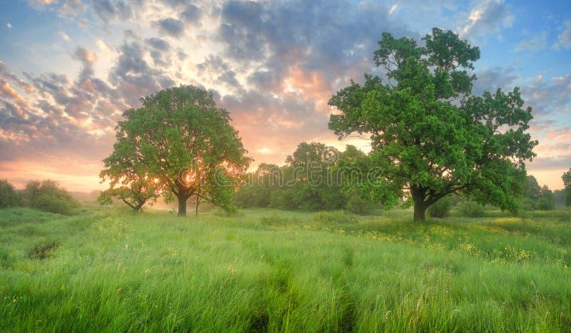 Mañana brumosa del resorte Hierba verde en valey foto de archivo libre de regalías