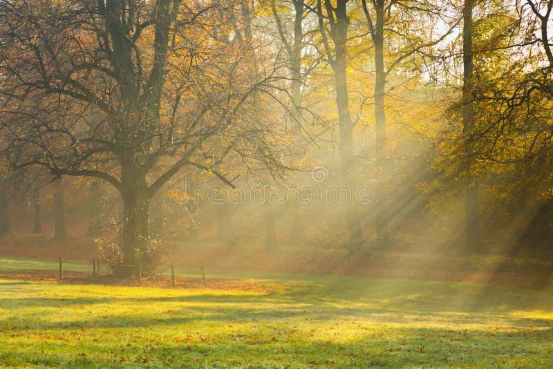 Mañana brumosa en bosque foto de archivo libre de regalías