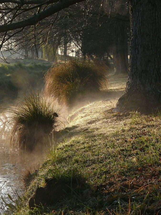 Mañana brumosa en una orilla del río fotografía de archivo