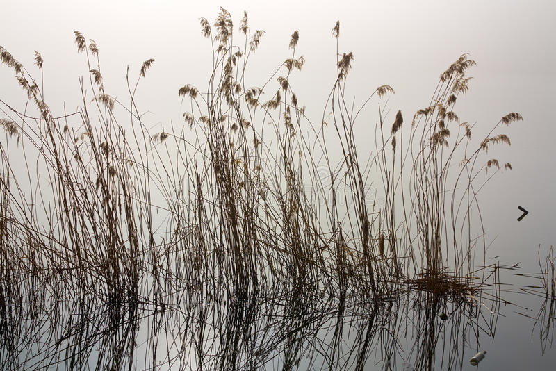 Mañana brumosa por el río fotografía de archivo