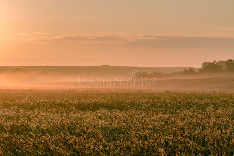 Mañana de julio que amanece sobre un campo de trigo imagen de archivo