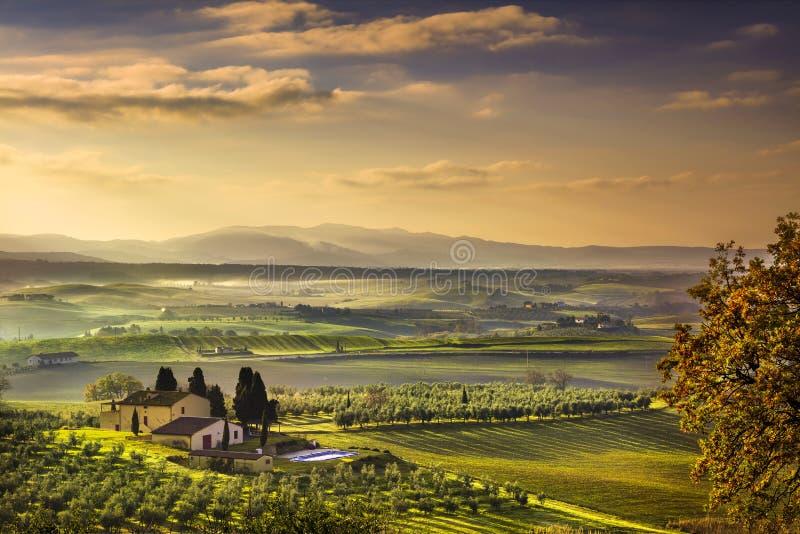 Mañana de niebla de Toscana Maremma, tierras de labrantío y campos verdes Italia fotografía de archivo libre de regalías