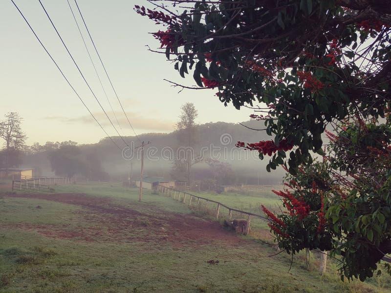 Mañana de niebla del país con las líneas eléctricas y la cerca foto de archivo libre de regalías